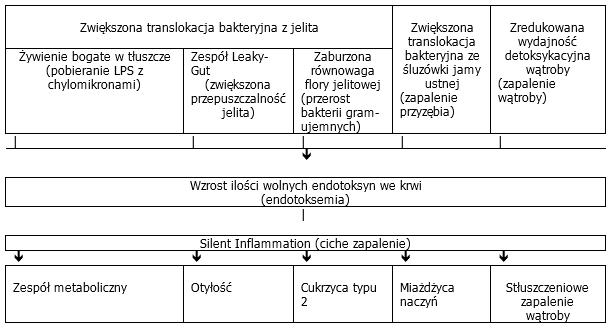 Przyczyny i skutki endotoksemi